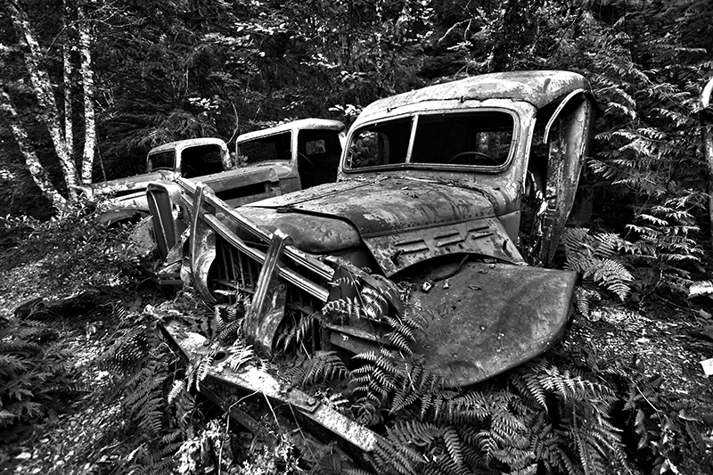 Black and White Abandoned Car In Forest Landscape Photo 26 NV Holden Photography