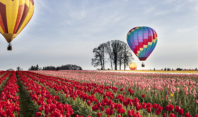 Tulips And Hot Air Balloons Landscape Photo 9 NV Holden Photography
