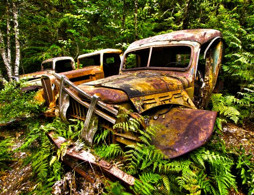 Old Trucks Overtaken By Nature