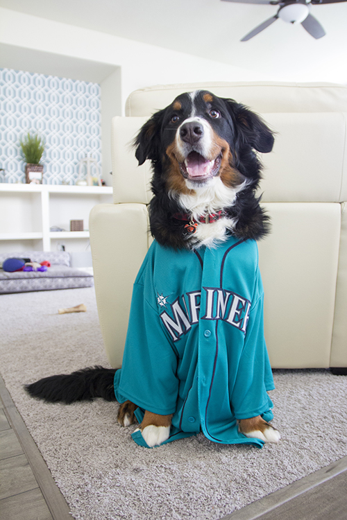 Dog In Baseball Jersey Pet Photo NV Holden Photography